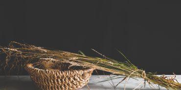 Seagrass-banner